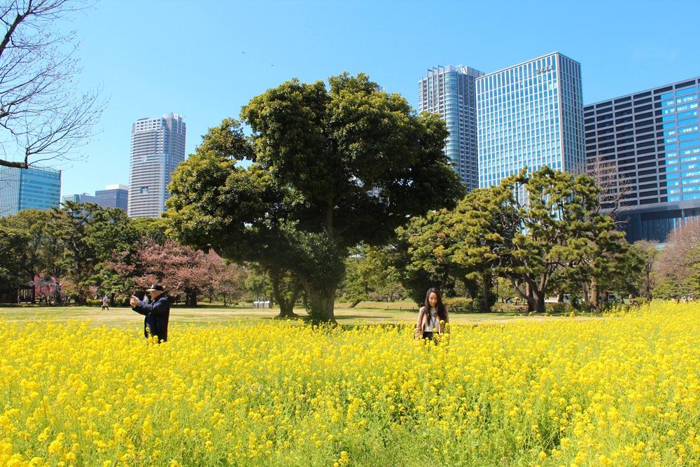tokyogardens
