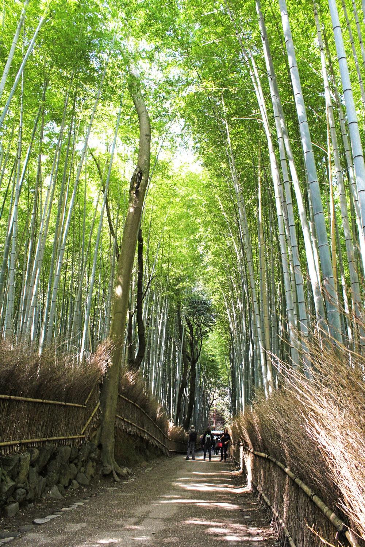 arashiyama-sagano bamboo groove
