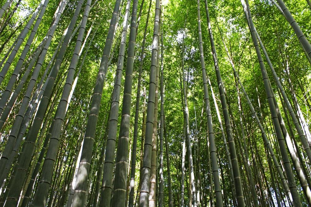 arashiyama-sagano