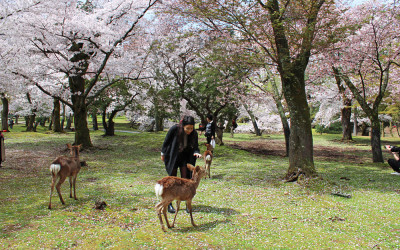 THE PERFECT DAY TRIP TO NARA, JAPAN