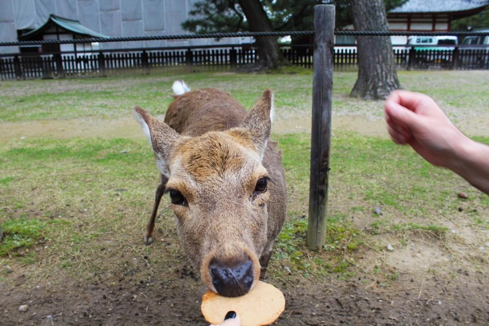 day trip to Nara deer park