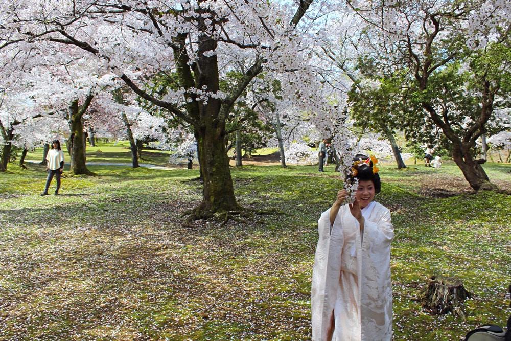 day trip to Nara Japan