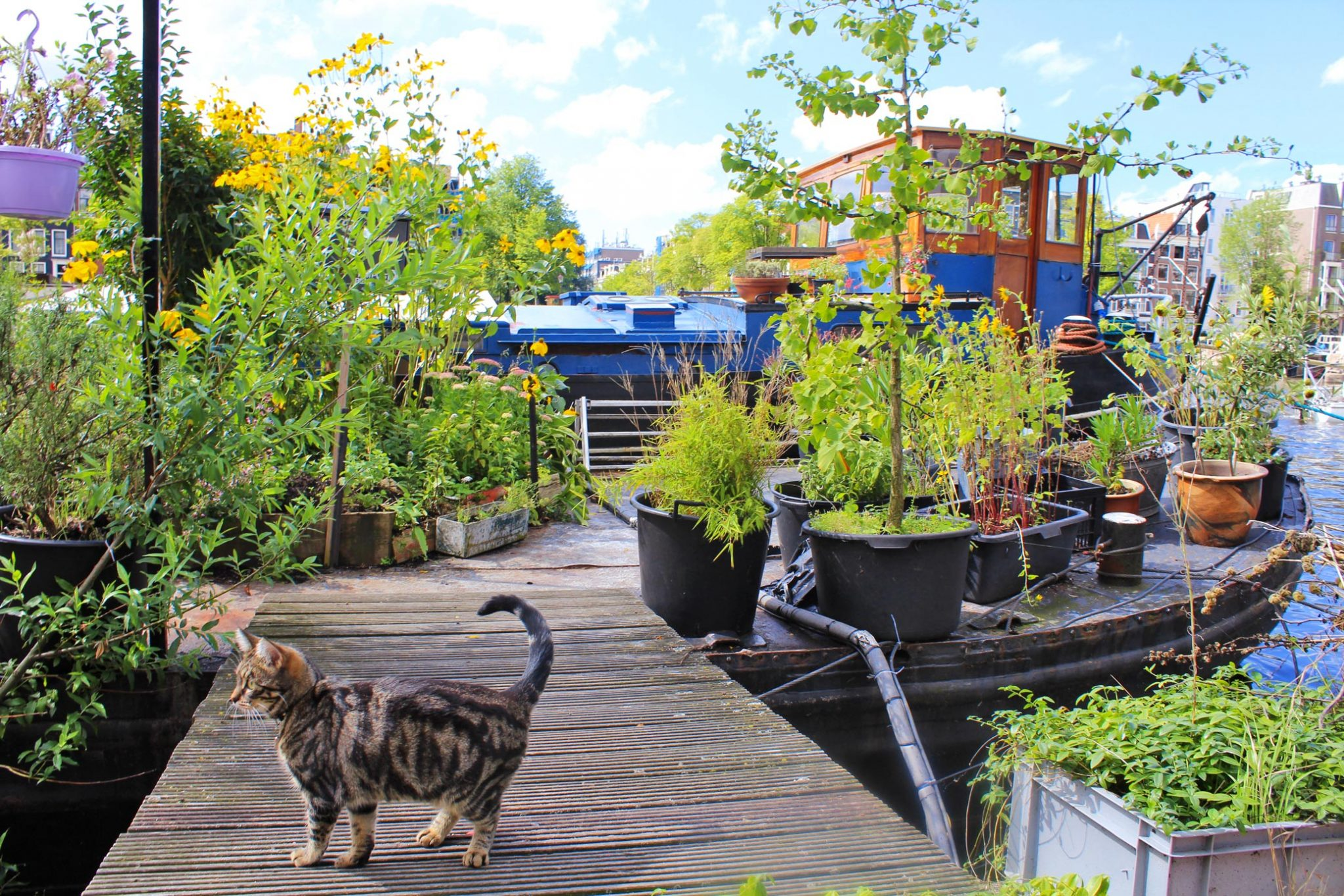 fun facts about amsterdam houseboats