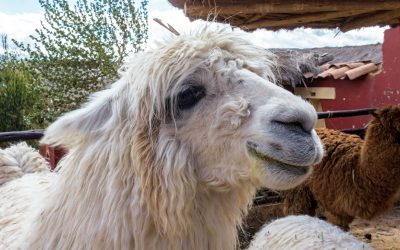 10 FASCINATING (AND WEIRD!) FUN FACTS ABOUT PERU