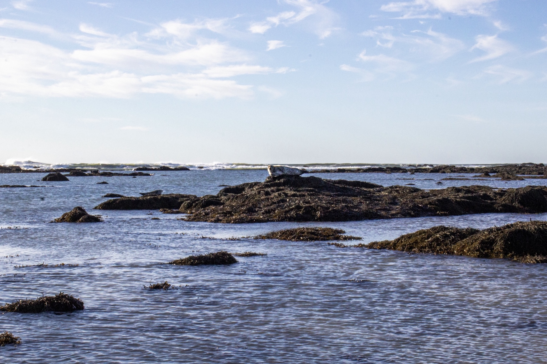 iceland ytri tunga seals